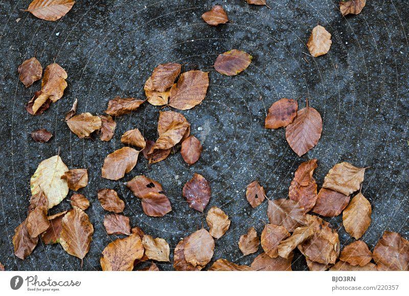 Zur Lage der Nation... Umwelt Natur Pflanze Herbst Blatt liegen alt dreckig natürlich blau braun grau Verfall Vergänglichkeit Zusammenhalt Boden Detailaufnahme