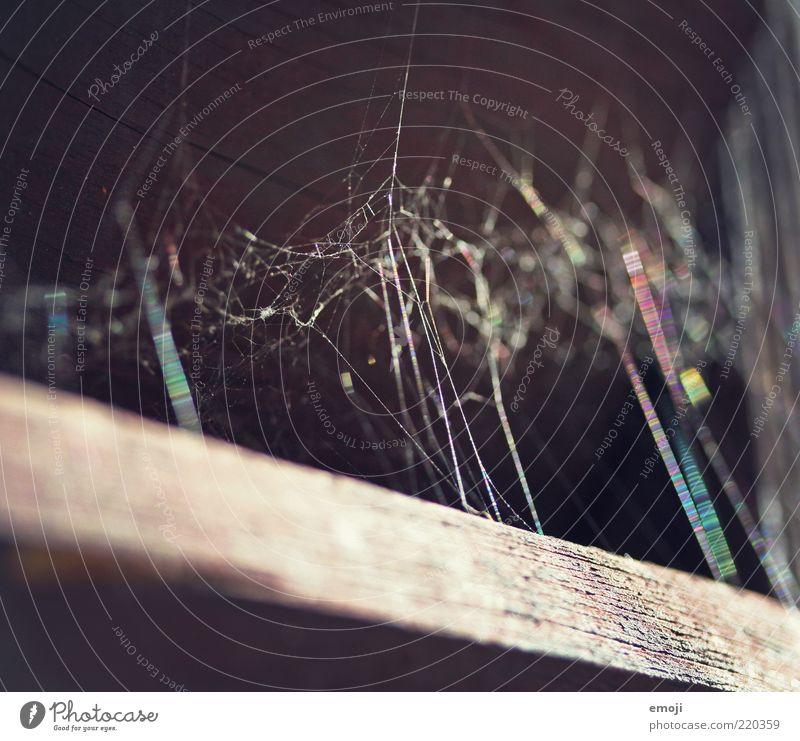 Spinnenfarbnetz Netzwerk Zusammenhalt Spinnennetz regenbogenfarben mehrfarbig Holz Farbfoto Außenaufnahme Nahaufnahme Detailaufnahme Makroaufnahme Tag Licht