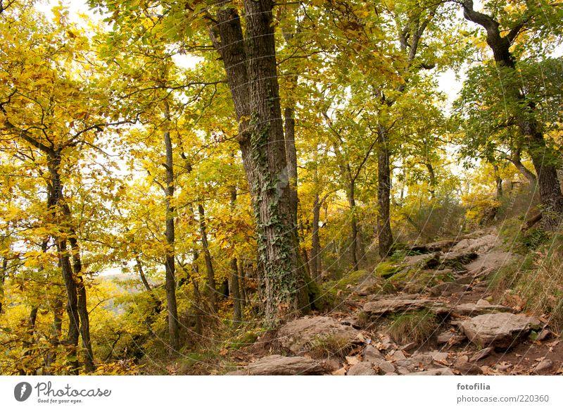 herbstmärchenwald Natur grün Baum Pflanze Ferien & Urlaub & Reisen ruhig Wald gelb Erholung Herbst Berge u. Gebirge Landschaft Umwelt Gras Erde gold