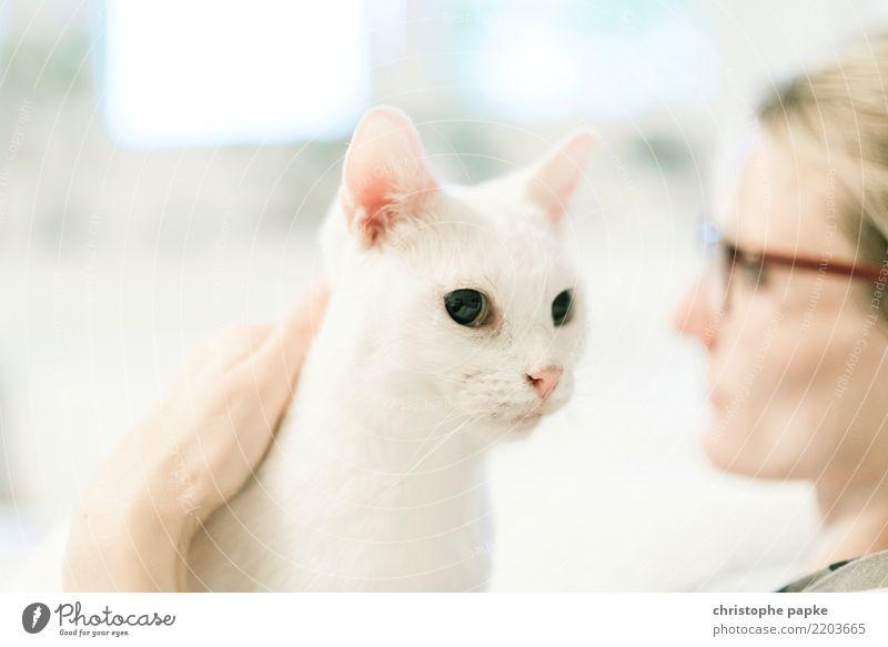aneinander vorbeisehen Katze Frau Mensch Tier Erwachsene feminin Wohnung Zufriedenheit Häusliches Leben träumen niedlich Brille Haustier Tiergesicht Streicheln