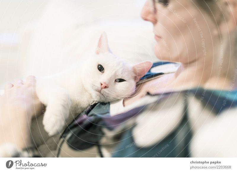 couch cat II weiß Erholung Tier Zufriedenheit niedlich Haustier Fell Tiergesicht Pfote Tierliebe