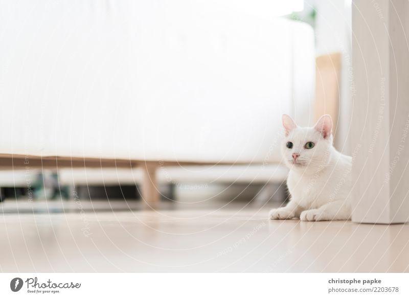 Perfekt getarnt Katze weiß Erholung Tier Häusliches Leben Zufriedenheit Wohnung Raum liegen niedlich Neugier Haustier Wohnzimmer Tarnung Tierliebe