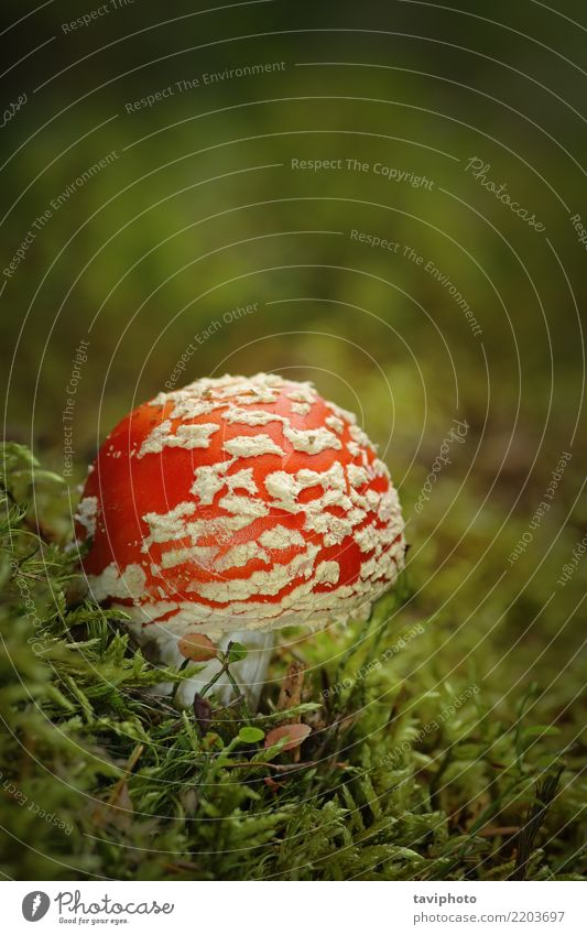 Natur Pflanze Farbe schön grün weiß rot Wald Herbst natürlich Gras hell wild Wachstum gefährlich Boden