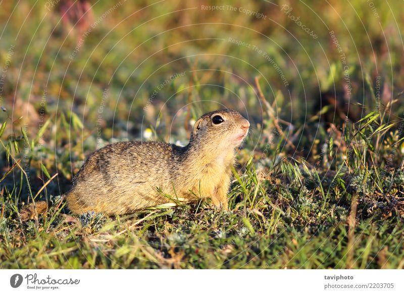 Natur Jugendliche Sommer schön Tier Essen Umwelt lustig Wiese natürlich Gras klein braun wild stehen niedlich