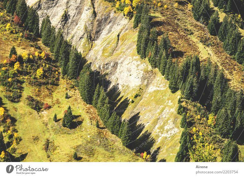 Baumgrenzen grün Landschaft Berge u. Gebirge gelb Felsen Wachstum Ordnung Streifen Neigung Alpen Klarheit tief diagonal Tal steil