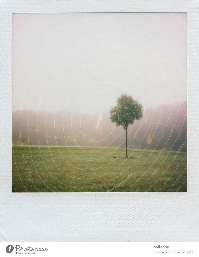 einsam Umwelt Natur Landschaft Pflanze Herbst Wetter Baum Gras Park Wiese dünn grün Einsamkeit Herbstwetter Herbstbeginn Herbsthimmel Farbfoto Gedeckte Farben