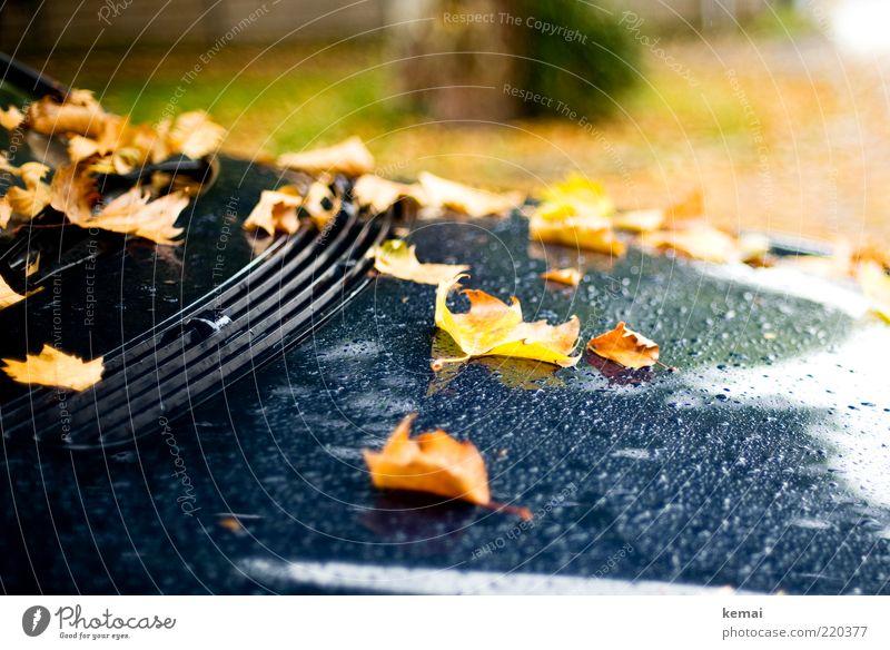 Motorhaubenschmuck Natur Wasser Pflanze Blatt schwarz gelb kalt Herbst PKW Regen Umwelt nass Wassertropfen Tropfen liegen Klima
