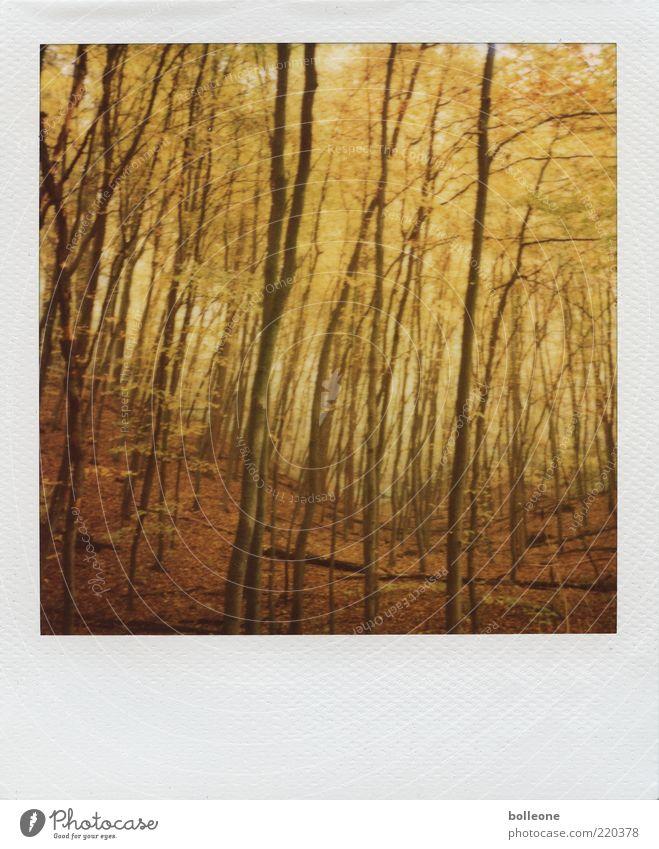Herbstfarben Tourismus Umwelt Natur Landschaft Pflanze Klima Wetter Baum Wald Hügel dünn braun gold Gefühle Stimmung Einsamkeit Farbe träumen Herbstlaub