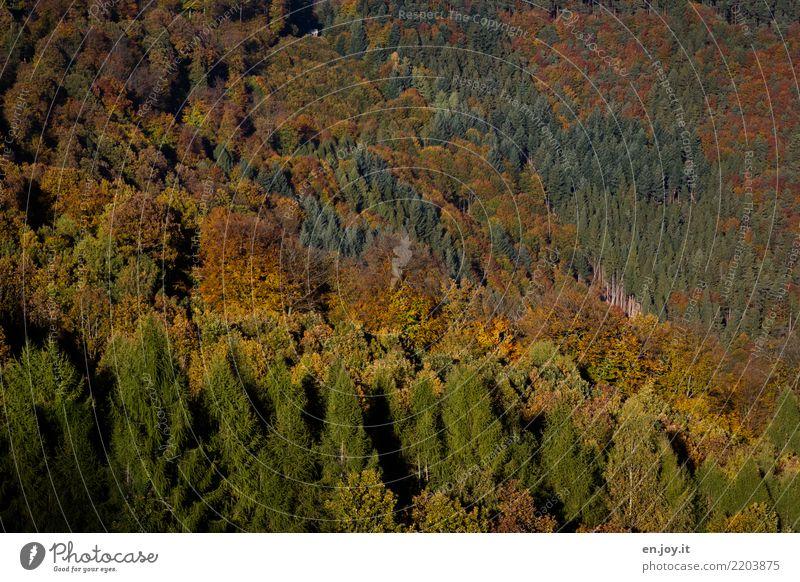Wandel Natur Landschaft Pflanze Herbst Klimawandel Wald Pfälzerwald alt grün orange Umwelt Umweltschutz Ferien & Urlaub & Reisen Vergänglichkeit Wachstum