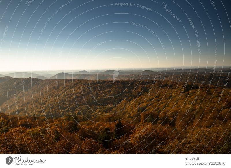 Weite Ferien & Urlaub & Reisen Ausflug Ferne Freiheit Umwelt Natur Landschaft Pflanze Himmel Wolkenloser Himmel Horizont Herbst Schönes Wetter Wald Hügel