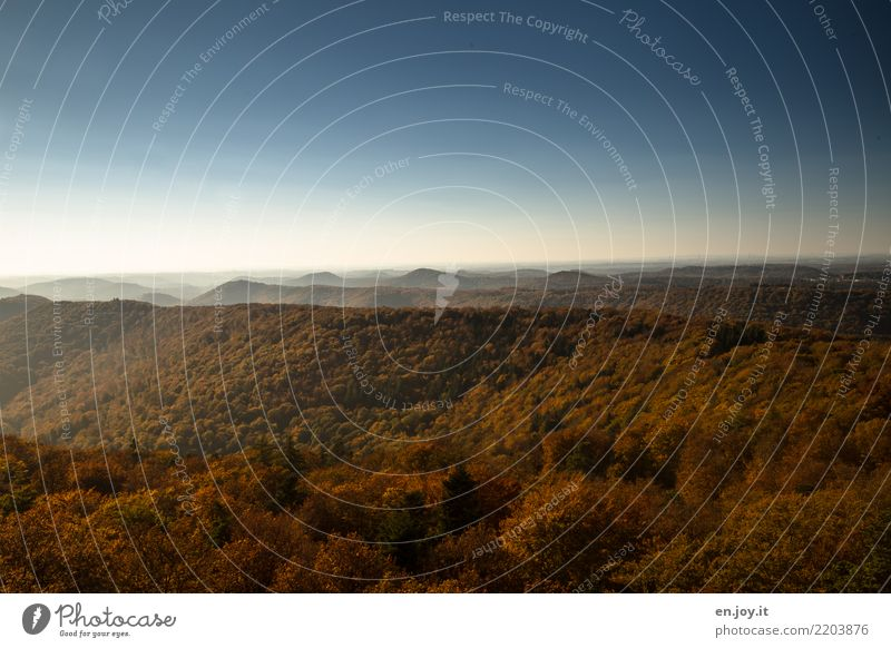 Weite Himmel Natur Ferien & Urlaub & Reisen Pflanze Landschaft Erholung ruhig Ferne Wald Berge u. Gebirge Umwelt Herbst Freiheit Ausflug Horizont Schönes Wetter