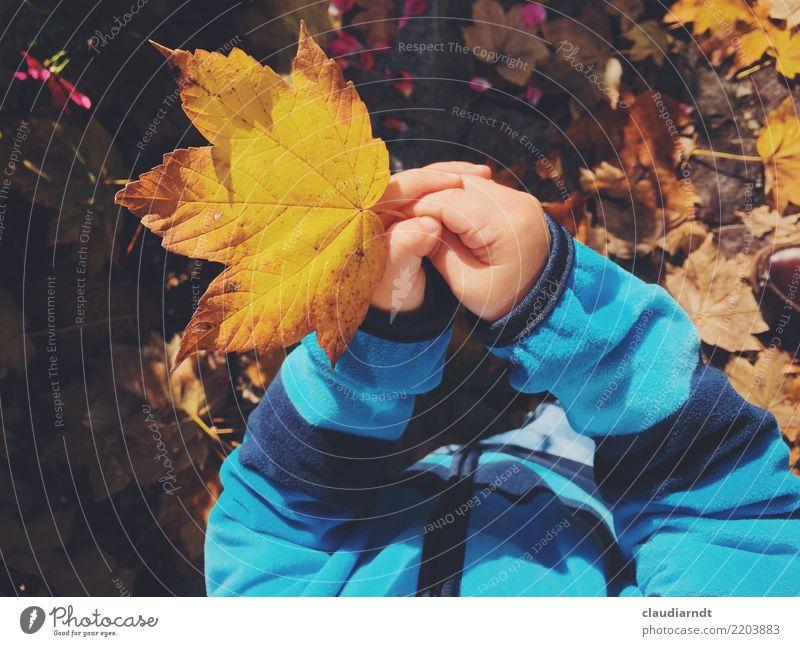 Herbst zum Anfassen Kind Mensch Natur Jugendliche Pflanze Junge Frau blau schön Baum Hand Blatt gelb Umwelt Garten braun