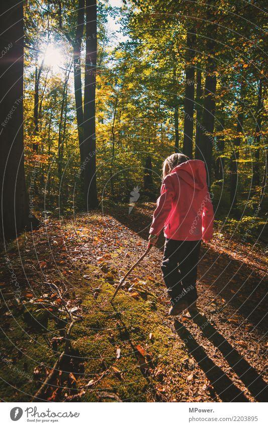 herbstspaziergang Spielen Mensch Kind Mädchen 1 Umwelt Natur Schönes Wetter Baum Blick wandern Herbst entdecken Wald Fußweg Stock Farbfoto Außenaufnahme Tag
