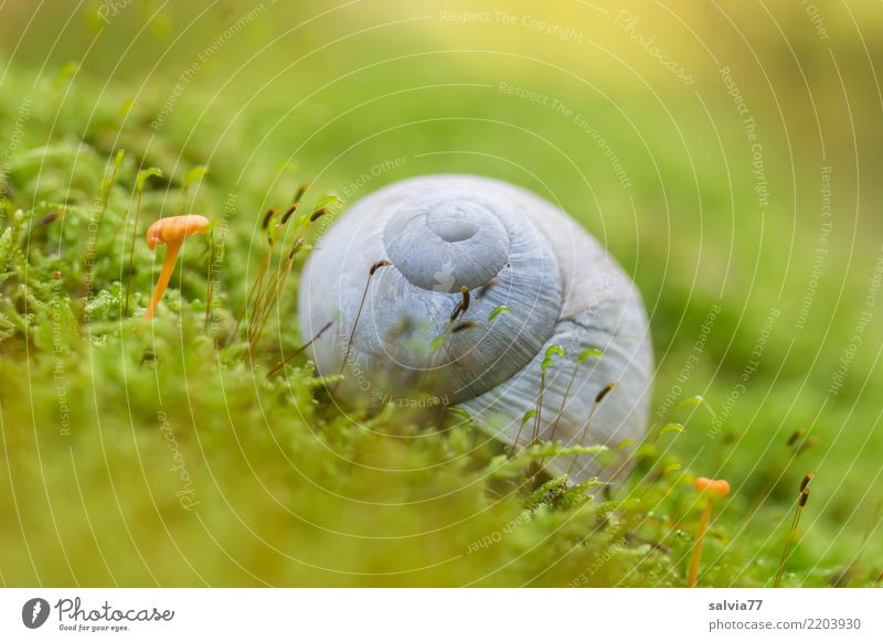Hanglage Natur Pflanze grün Einsamkeit Tier ruhig Wald Herbst grau Erde Wachstum Idylle rund weich Schutz entdecken
