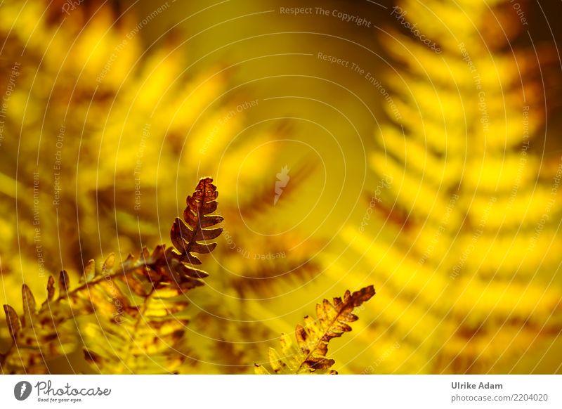 Leuchtender Farn Leben harmonisch Wohlgefühl Zufriedenheit Erholung ruhig Meditation Natur Pflanze Herbst Blatt Echte Farne herbstlich Feld Wald Seeufer