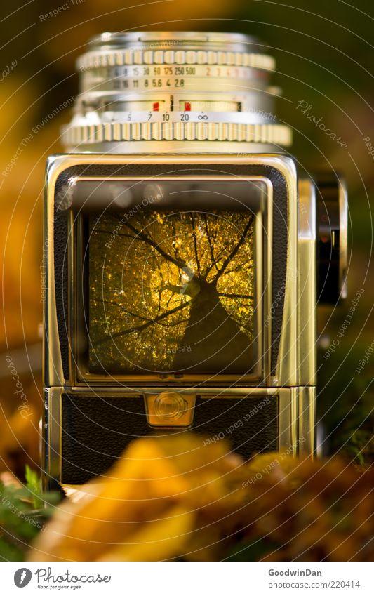 Der Vorgang Umwelt Natur Erde Herbst Pflanze Baum Fotokamera Sucher Mittelformat alt ästhetisch authentisch außergewöhnlich eckig einfach groß retro schön