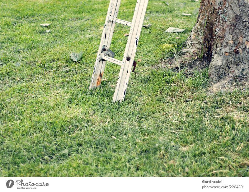 Nach oben Umwelt Natur Gras Garten Wiese grün Leiter Baumrinde Leitersprosse aufsteigen Farbfoto Außenaufnahme Textfreiraum unten Tag Schwache Tiefenschärfe