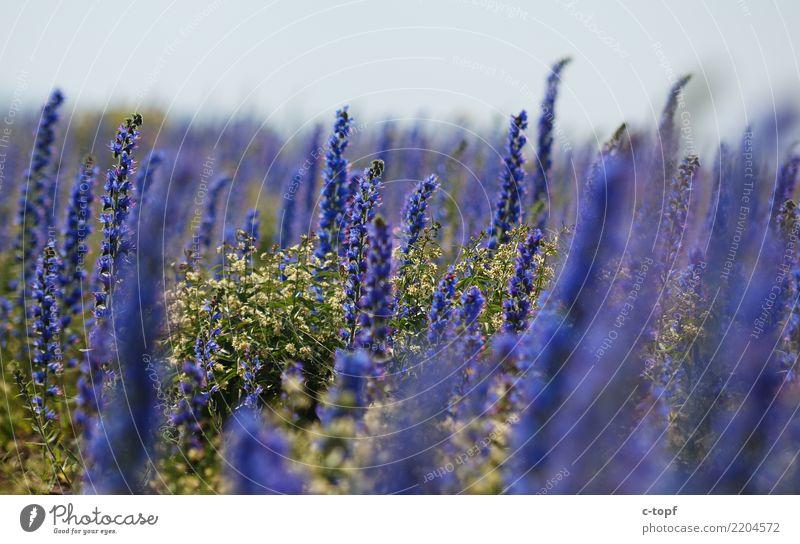 Reign of Purple Umwelt Natur Landschaft Pflanze Sonne Sonnenlicht Sommer Schönes Wetter Blume Gras Blüte Wiese Seeufer Glück Fröhlichkeit Warmherzigkeit Liebe