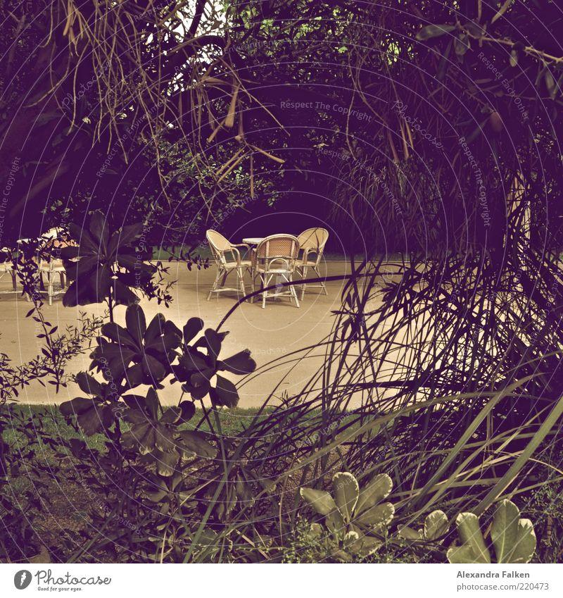Schattiges Plätzchen. Pflanze Ferien & Urlaub & Reisen ruhig Erholung Stil Garten Tisch Lifestyle Tourismus Pause Stuhl Freizeit & Hobby Möbel Urwald Gartenstuhl Gartenmöbel