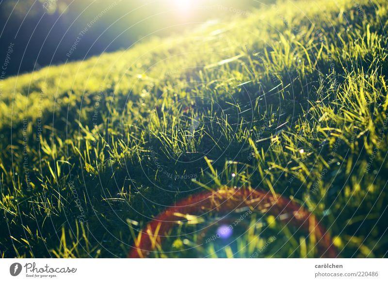 ein Licht zum niederknien Natur grün gelb Wiese Gras diagonal Schönes Wetter Licht Berghang Blendenfleck Sommer mehrfarbig tiefstehend