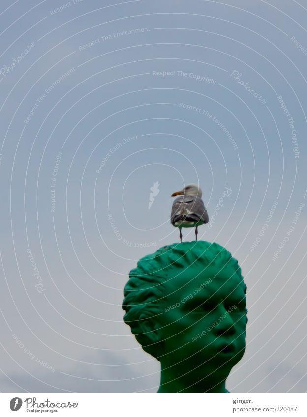 Blos d'r jet! Tier Wildtier Vogel 1 stehen Himmel Statue Kopf Möwe blasen grün oben Wolken Gesicht Schnabel Textfreiraum oben Skulptur skulptural skurril lustig
