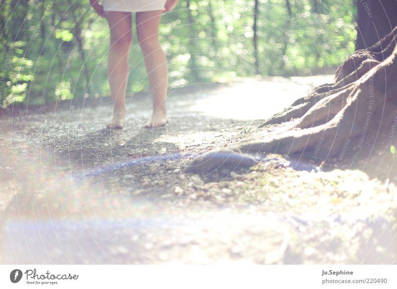 Mielikki 1 Mensch Natur Sommer Wald stehen braun grün Beine Wurzel Sonnenlicht Barfuß Einsamkeit Fußweg Frauenbein Minirock Minikleid Detailaufnahme