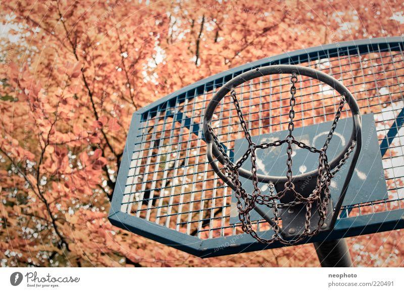 Hinterhoftraum Baum blau rot gelb Sport Herbst Freizeit & Hobby Kette Basketball Herbstlaub Zweige u. Äste Basketballkorb Ballsport Herbstfärbung Blätterdach Sportstätten