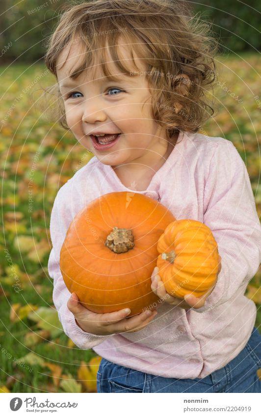Bezauberndes Mädchen-Kleinkind spielt mit Kürbissen auf einem Herbstfeld Freude Garten Halloween Natur Blatt Park Wald Lächeln träumen Umarmen Fröhlichkeit hell