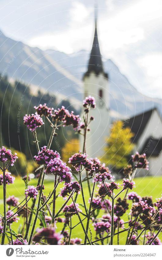 Kirche Vision Schönes Wetter Blume Berge u. Gebirge Dorf Kirchturm Dorfkirche Duft Spitze rosa weiß Zufriedenheit Romantik Glaube Religion & Glaube Idylle