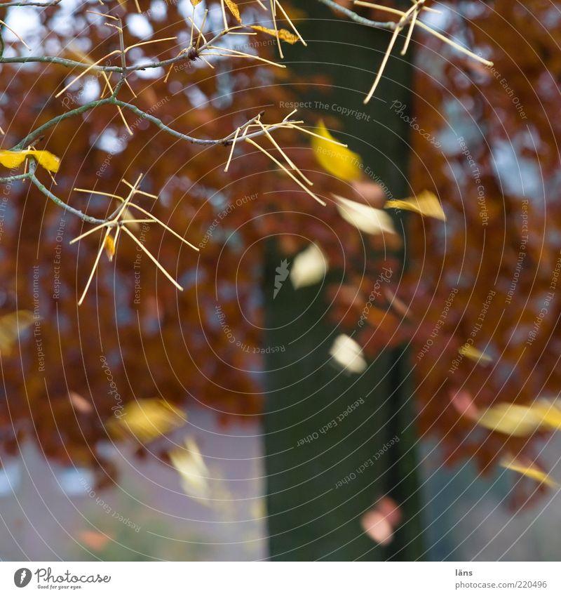 Pixelsturm Natur Baum Pflanze Blatt gelb Herbst braun Wind Wetter Umwelt fliegen Wandel & Veränderung fallen Vergänglichkeit Ast Sturm