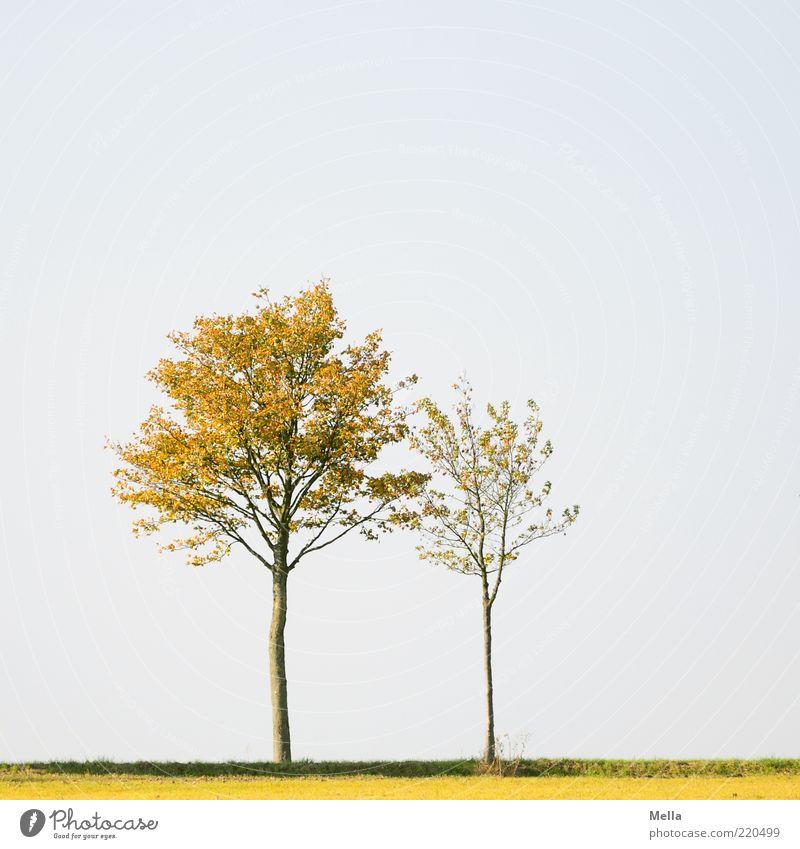 Stand by me Natur Himmel Baum Pflanze Landschaft Stimmung Zusammensein Umwelt paarweise stehen Schutz natürlich Geborgenheit Zusammenhalt friedlich herbstlich