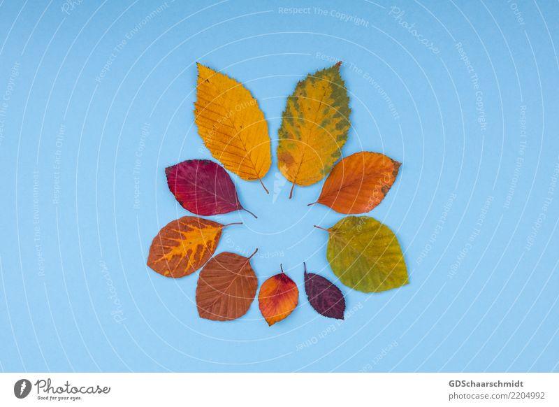 colours of autumn Natur Farbe schön grün rot Blatt Wärme gelb Herbst natürlich Kunst außergewöhnlich braun orange Dekoration & Verzierung ästhetisch