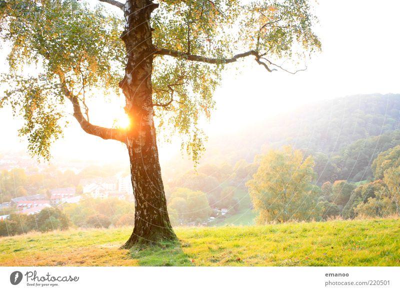 Sonnenbirke Natur grün weiß schön Baum Pflanze Ferien & Urlaub & Reisen Sommer Blatt Wald Umwelt Landschaft Berge u. Gebirge Gras Wärme hell