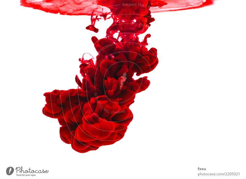 Acrylfarbe und Wasser Farbe rot mehrfarbig malen Aquarell Kunst Wolken farbwolke Explosion Ölfarbe Künstler Blut hell Sturm Gewitter Stimmung