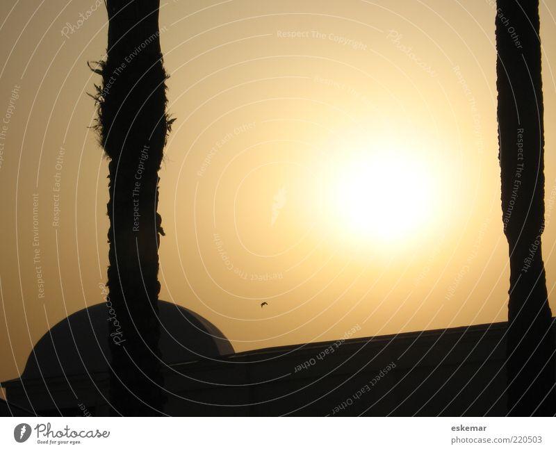 fern Baum Moschee Mauer Wand Vogel exotisch gold Fernweh Farbe Ferien & Urlaub & Reisen Religion & Glaube Palme Baumstamm Abenddämmerung Sonnenuntergang