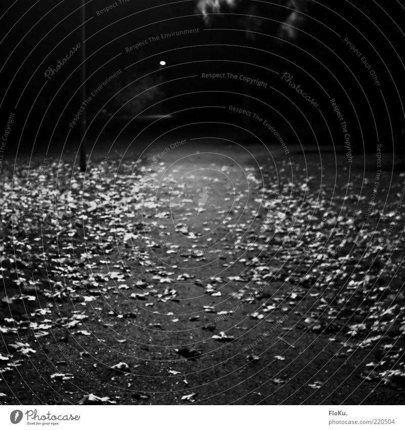 Nachts im Park Umwelt Natur Herbst Blatt grau schwarz weiß Stimmung Einsamkeit Wege & Pfade Schotterweg Langzeitbelichtung Schwarzweißfoto Außenaufnahme