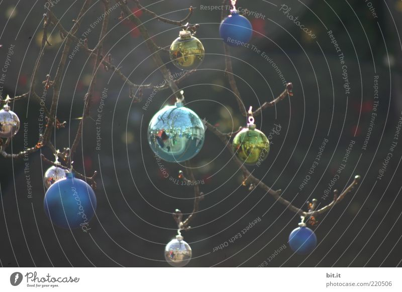 Balance Weihnachten & Advent Baum Stimmung Feste & Feiern glänzend Kitsch Dekoration & Verzierung Punkt Kugel leuchten Tau Christbaumkugel hängen Tradition Gleichgewicht