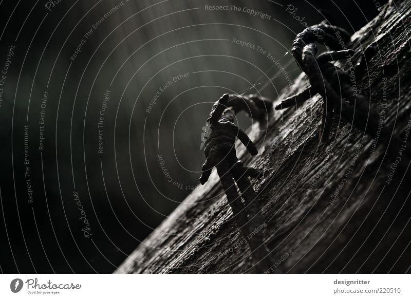 Stille Befreiung Einsamkeit dunkel Freiheit Holz Sicherheit Schutz Vergänglichkeit Verfall Rost Zaun gefangen Stacheldraht Begrenzung Stacheldrahtzaun