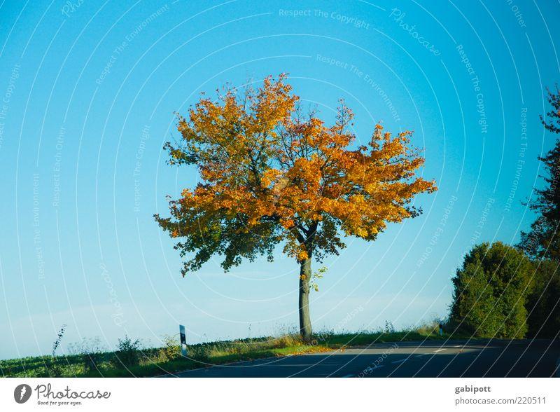 Randerscheinung Umwelt Landschaft Himmel Wolkenloser Himmel Herbst Pflanze Baum Landstraße blau standhaft einzigartig Laubbaum Blatt mehrfarbig Am Rand Farbfoto