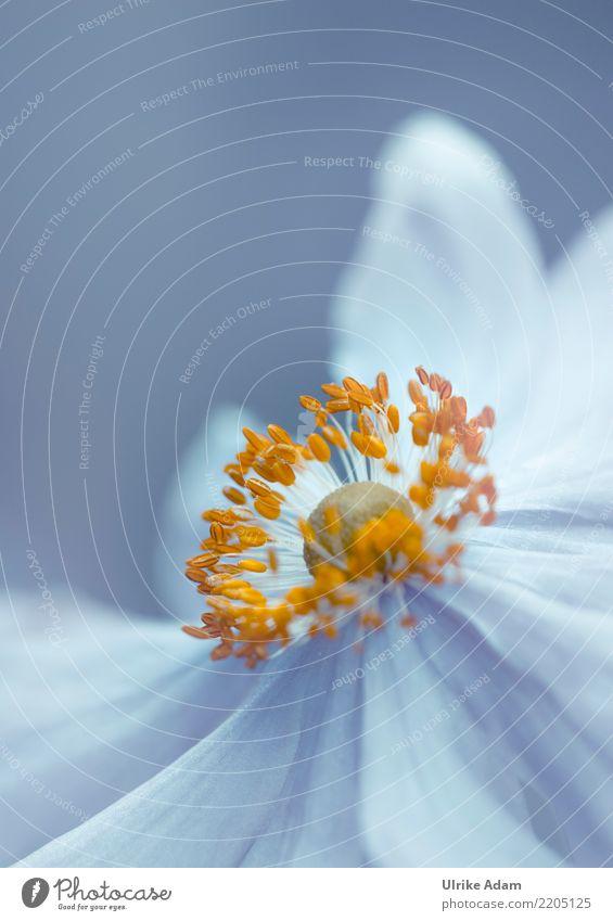 Herbst - Anemone Natur Pflanze blau Sommer weiß Blume Erholung ruhig gelb Blüte Garten Design Zufriedenheit Park Dekoration & Verzierung