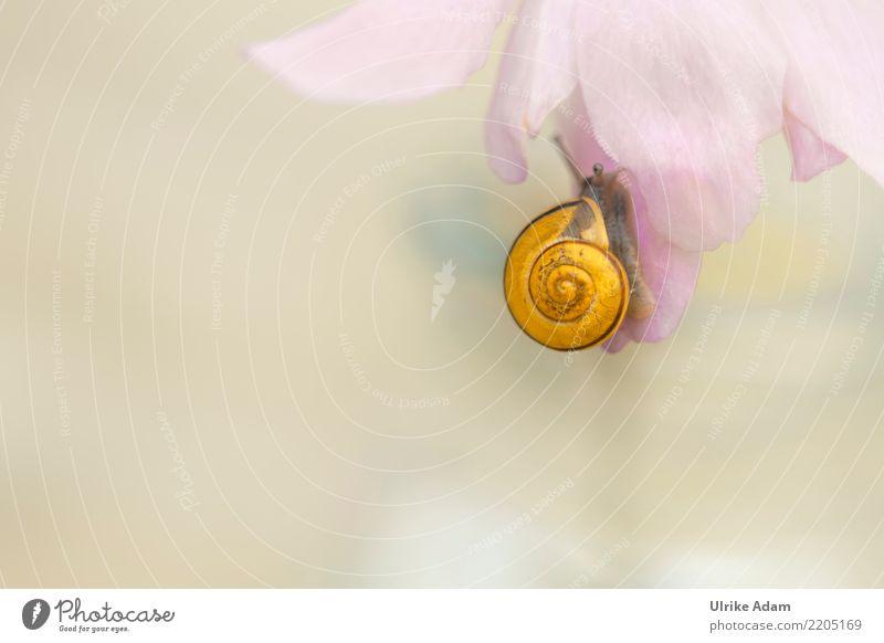Schnecke mit gelben Schneckenhaus am Blütenblatt Wellness Leben harmonisch Wohlgefühl Zufriedenheit Erholung ruhig Meditation Natur Tier Sommer Herbst Weichtier