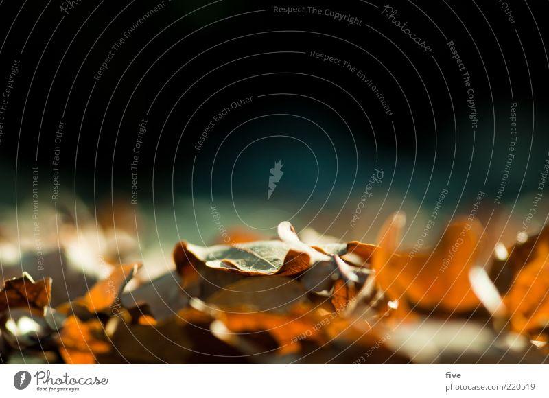 blätterhaufen Natur Sonnenlicht Herbst Schönes Wetter Pflanze Blatt herbstlich Herbstlaub Eichenblatt Farbfoto Außenaufnahme Detailaufnahme Tag Licht Unschärfe