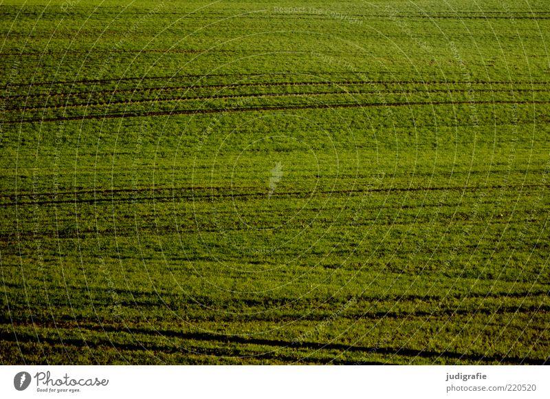 Acker Natur grün Pflanze Wiese Gras Landschaft Linie Feld Umwelt Erde Wachstum natürlich Textfreiraum Wellenform