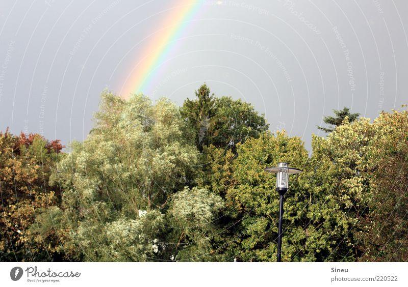 Somewhere over the Rainbow Natur Himmel Wolkenloser Himmel Baum Park beobachten genießen leuchten Begeisterung Regenbogen Laterne Laternenpfahl