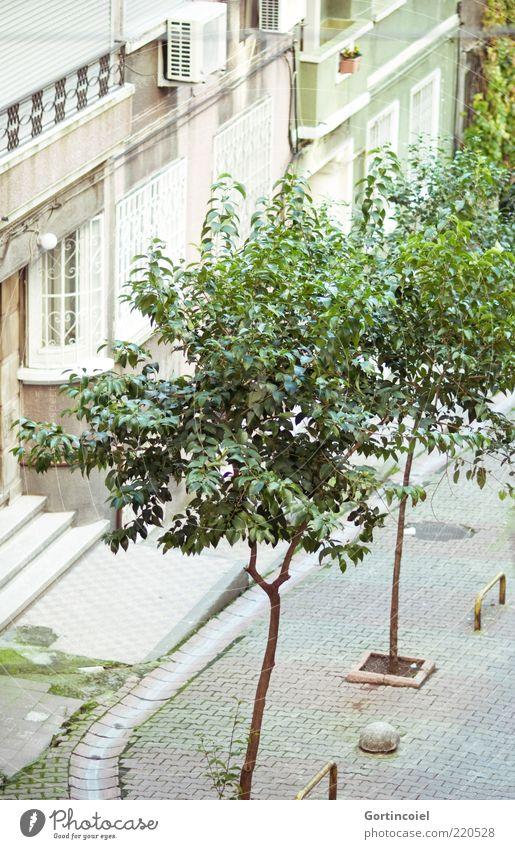 Seitenstraße Baum Stadt Haus Fassade grün Istanbul Türkei Straße Cihangir Farbfoto Außenaufnahme Tag Menschenleer Wohnhaus Wohngebiet Stadtteil