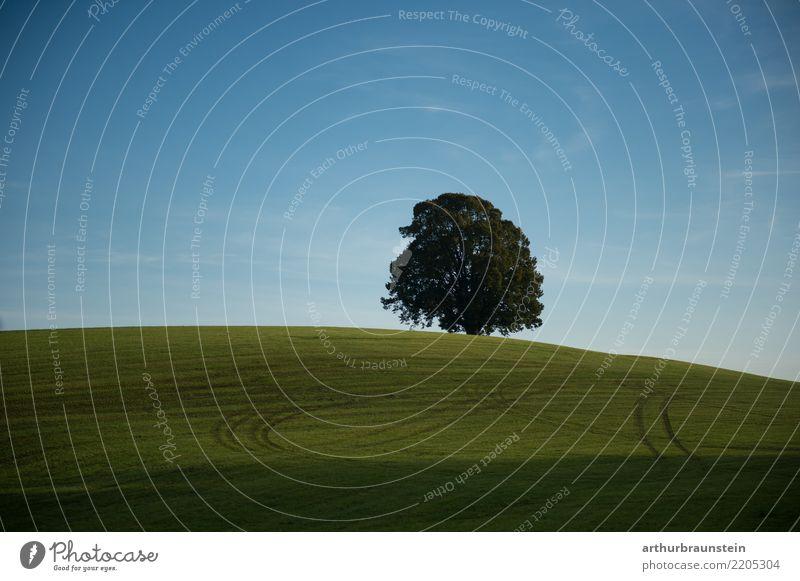 Linde in der Wiese auf Hügel Gesundheit Ferien & Urlaub & Reisen wandern Joggen Spaziergang Landwirt Landwirtschaft Forstwirtschaft Umwelt Natur Landschaft