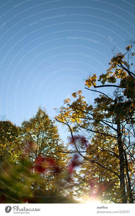Hummelperspektive Landschaft Wolkenloser Himmel Sonne Sonnenaufgang Sonnenuntergang Sonnenlicht Herbst Schönes Wetter Pflanze Baum Blume Park natürlich blau
