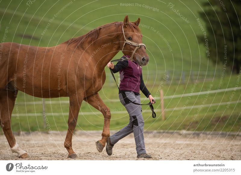 Junge Frau mit Pferde auf der Pferdekoppel im Freien Mensch Natur Ferien & Urlaub & Reisen Jugendliche Sommer Baum Tier 18-30 Jahre Erwachsene Umwelt Bewegung