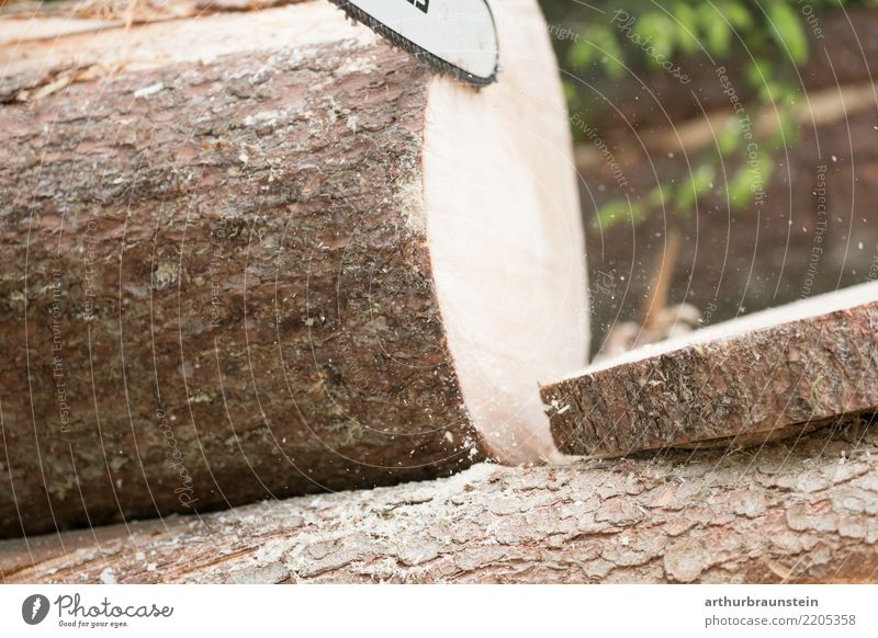 Förster bearbeitet Baum mit Kettensäge Berufsausbildung Arbeit & Erwerbstätigkeit Handwerker Forstwald Wald Arbeitsplatz Wirtschaft Landwirtschaft