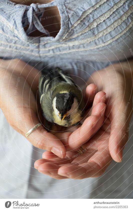 Frau mit Kohlmeise in der Hand Zoologie Tierpfleger Mensch feminin Junge Frau Jugendliche Leben 1 30-45 Jahre Erwachsene Natur Park T-Shirt Wildtier Vogel